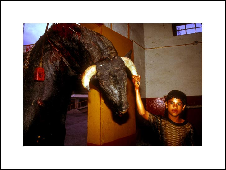 Bull boy, Juarez - 2002