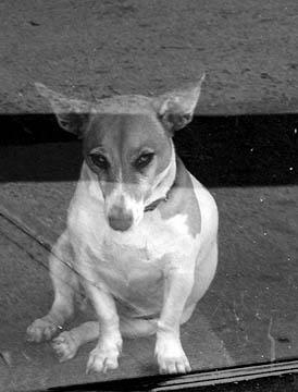 nyc-doglores.jpg